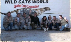 Wild Cats World