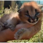 Lea Kittens 2