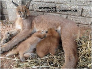 Lea Kittens 4